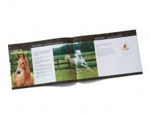 pferde-equina-heft-tiere-grafik-bildbearbeitung