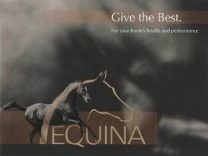 equina-pferde-grafik-digitale-bildbearbeitung-werbemittel-plakat