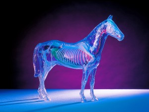 Produktfotografie, Modell eines Pferdes