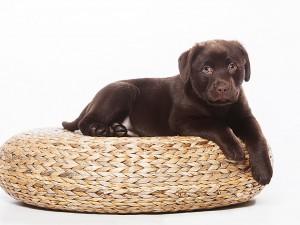 Tier Fotograf, Hund auf Requisite