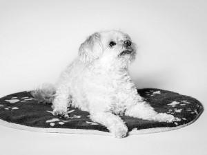 Tier Fotograf, Portrait des Hundes mit gezieltem Blick